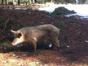 Charcuterie Corse de porc Nustrale U LUGO