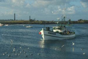 Les sardines de ma Compagnie Bretonne du Poisson