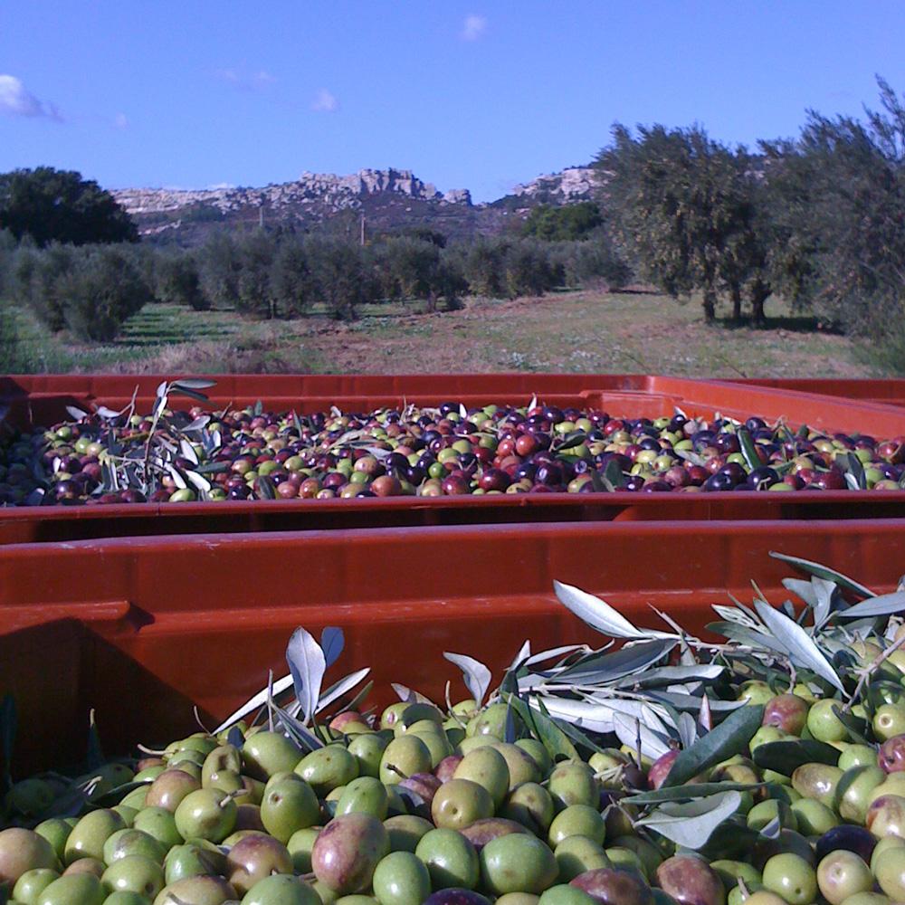 huile d'olive de Provence Château de panisse