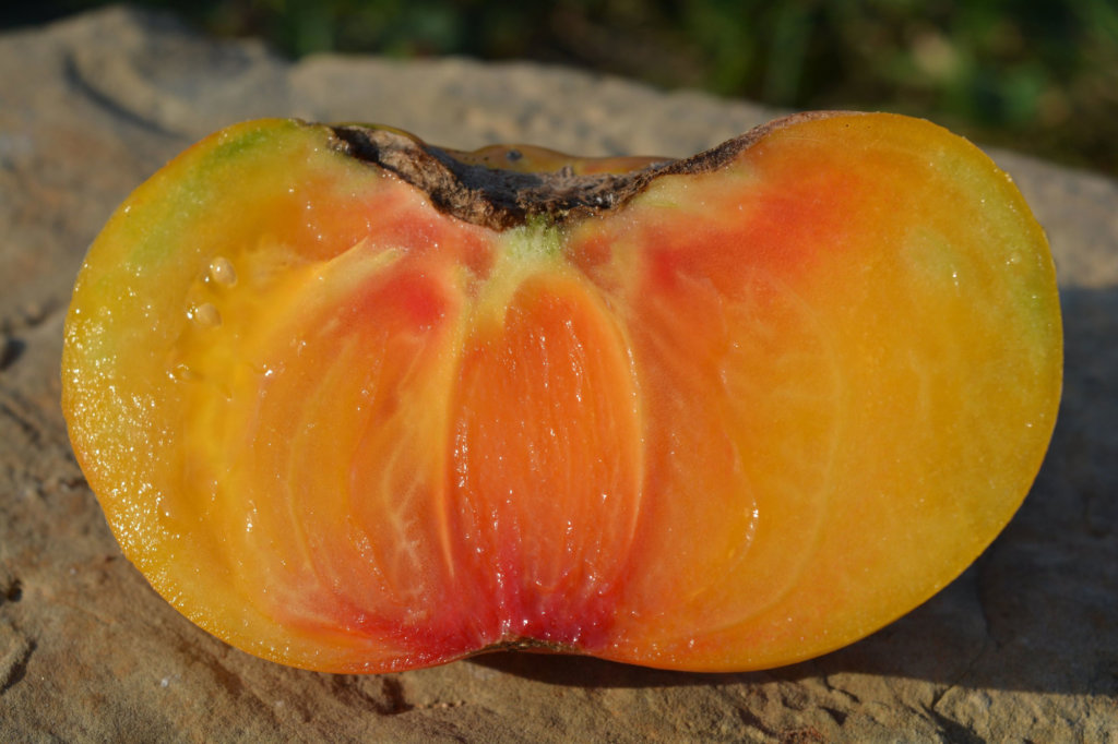 TOMATE O CŒUR : Pur Jus de Tomate BIO des Pyrénées